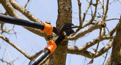 Los Angeles tree pruning